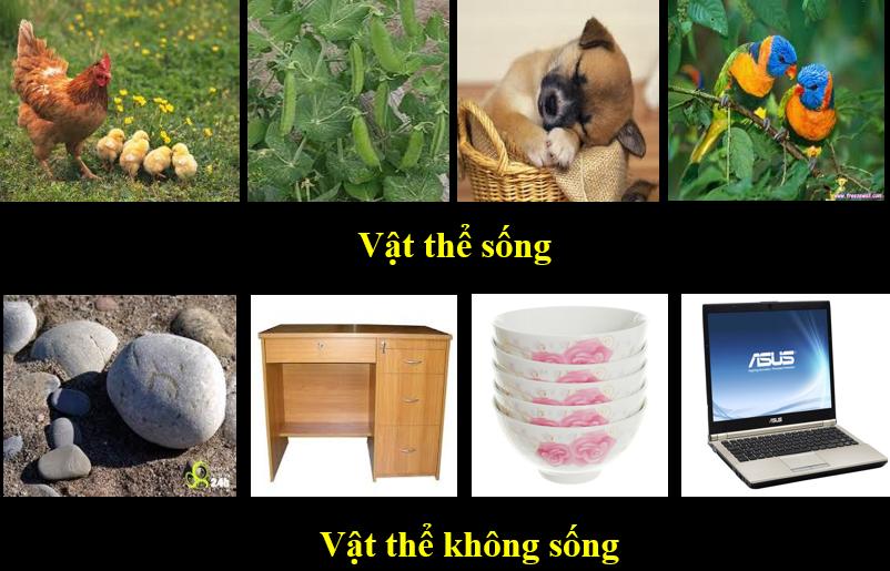 Một số ví dụ minh họa về dạng vật sống và vật không sống