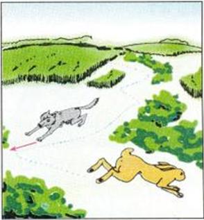 Cách chạy của Thỏ khi bị săn đuổi