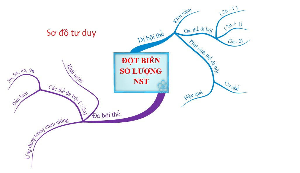 sơ đồ tư duy về đột biến số lượng NST
