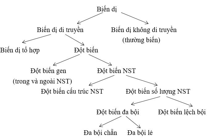 sơ đồ phân loại biến dị