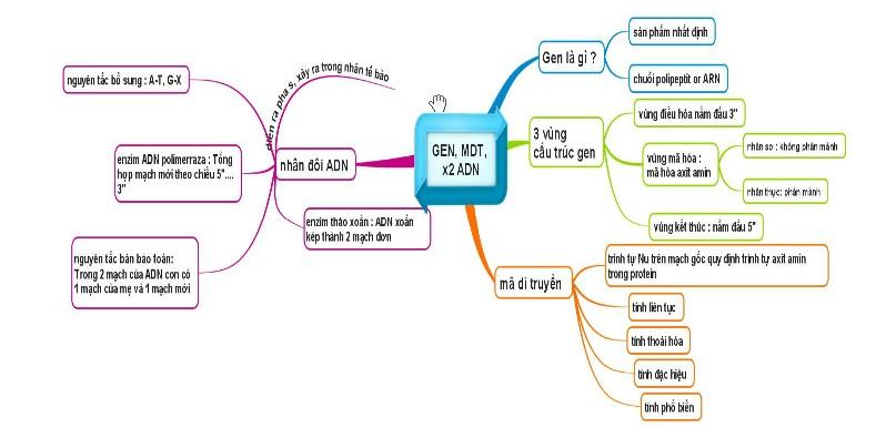 Sơ đồ tư duy - Gen, mã di truyền và quá trình nhân đôi ADN