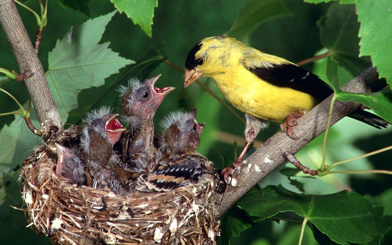 sinh sản hữu tính ở động vật