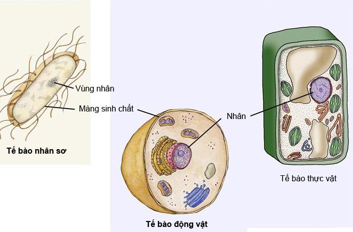 Cấu tạo điển hình của các nhóm sinh vật