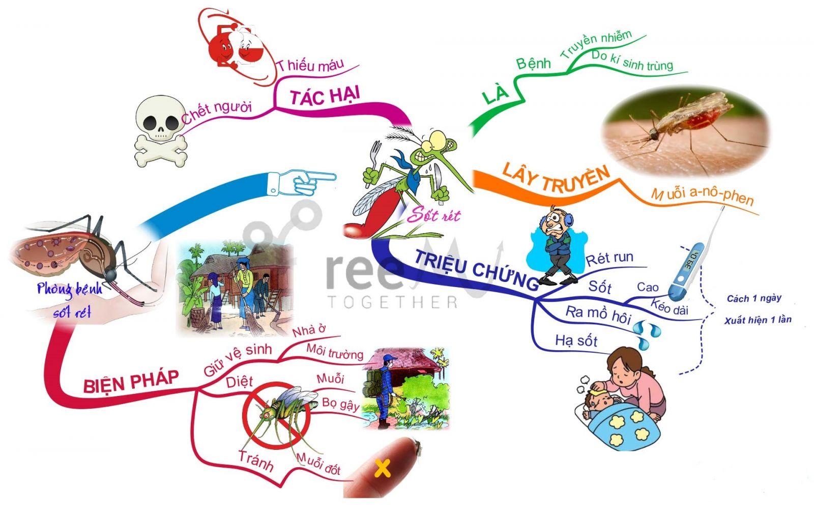 tìm hiểu về bệnh sốt rét