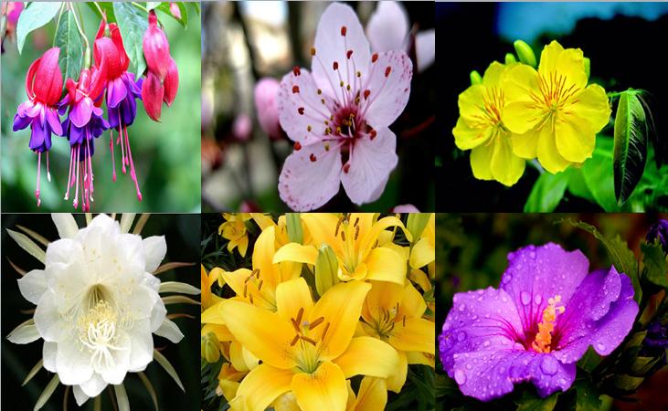Một số loài hoa