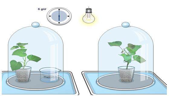 Thí nghiệm xác định cây cần những chất gì để chế tạo tinh bột