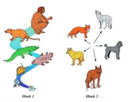 quá trình tiến hóa