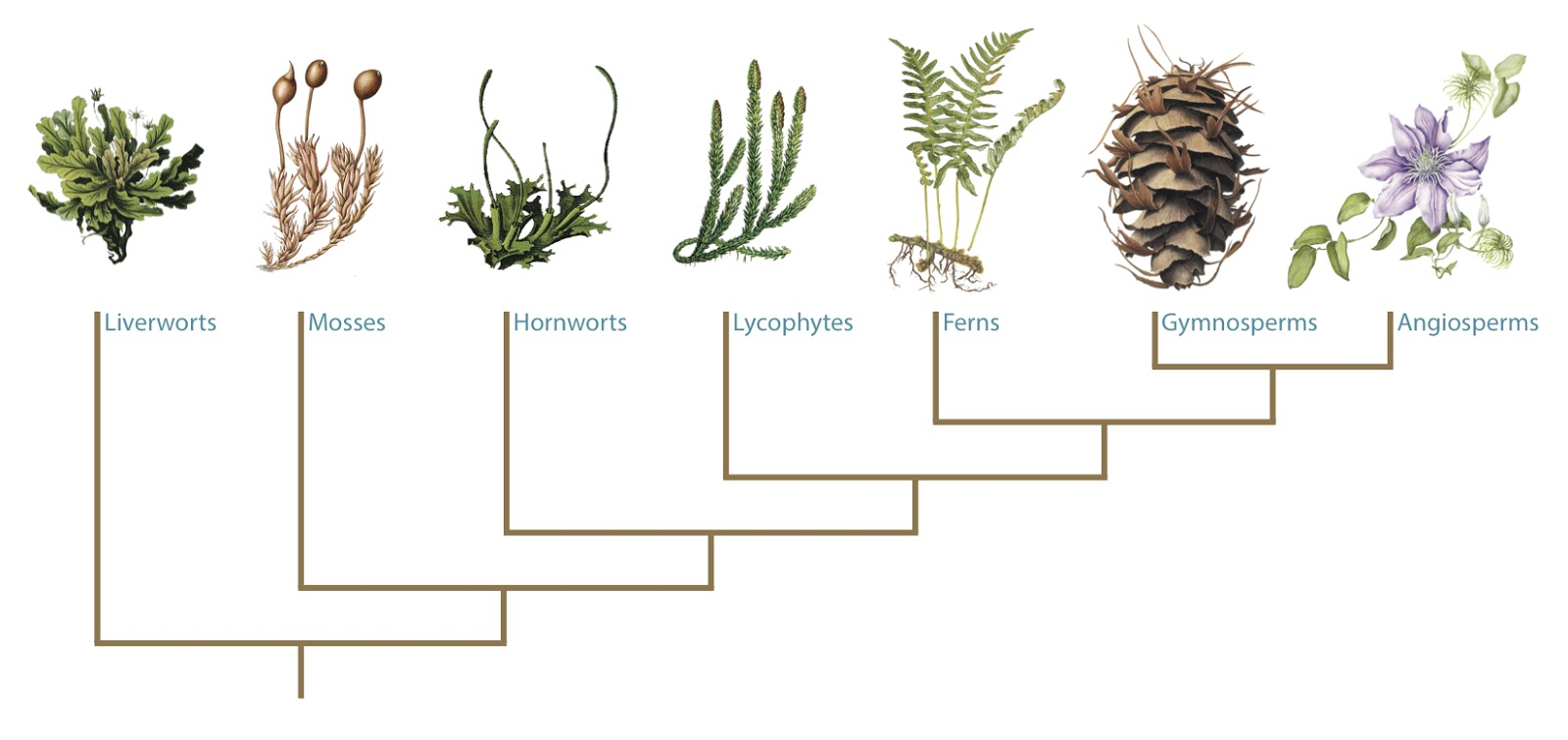 Quá trình tiến hóa ở thực vật