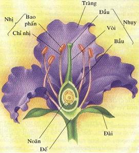 Các bộ phận của hoa