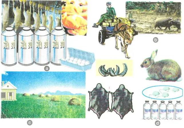 Vai trò của chăn nuôi trong nền kinh tế