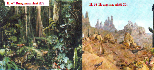 Rừng mưa nhiệt đới và Hoang mạc nhiệt đới