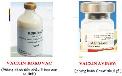 Ví dụ về vacxin
