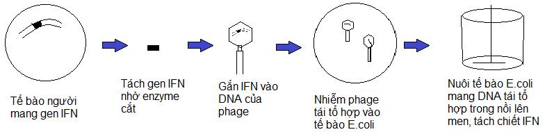 Kết quả hình ảnh cho Quy trình sản xuất interferon