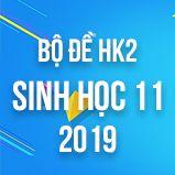 Bộ đề thi HK2 môn Sinh học lớp 11 năm 2019