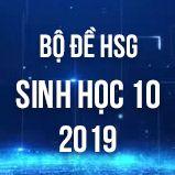 Bộ đề thi HSG môn Sinh học lớp 10 năm 2019