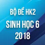 Bộ đề thi HK2 môn Sinh học lớp 6 năm 2018