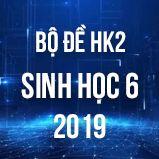 Bộ đề thi HK2 môn Sinh học lớp 6 năm 2019