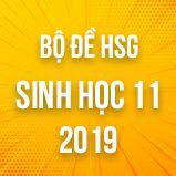Bộ đề thi HSG môn Sinh học lớp 11 năm 2018-2019