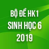 Bộ đề thi HK1 môn Sinh học lớp 6 năm 2019