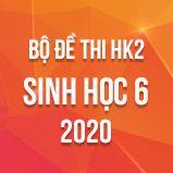 Bộ đề thi HK2 môn Sinh học lớp 6 năm 2020