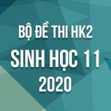 Bộ đề thi HK2 môn Sinh học lớp 11 năm 2020