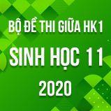 Bộ đề thi giữa HK1 môn Sinh học lớp 11 năm 2020