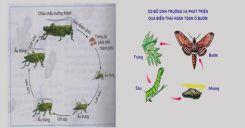 Bài 39: Các nhân tố ảnh hưởng đến sinh trưởng và phát triển ở động vật (tiếp theo)