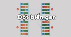 Bài 21: Đột biến gen