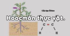 Bài 35: Hoocmôn thực vật