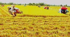 Bài 34: Thực hành - Phân tích mối quan hệ giữa dân số với việc sản xuất lương thực ở đồng bằng Sông Hồng