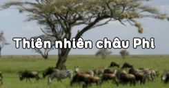 Bài 26: Thiên nhiên châu Phi