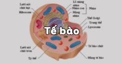 Bài 3: Tế bào