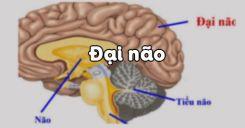 Bài 47: Đại não