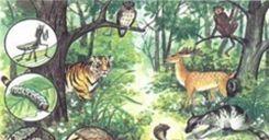 Bài 40: Quần xã sinh vật và một số đặc trưng cơ bản của quần xã