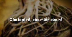 Bài 9: Các loại rễ, các miền của rễ