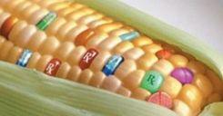 Bài 18: Chọn giống vật nuôi và cây trồng dựa trên nguồn biến dị tổ hợp