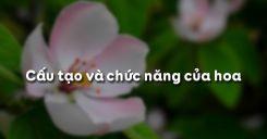 Bài 28: Cấu tạo và chức năng của hoa