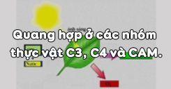 Bài 9: Quang hợp ở các nhóm thực vật C3, C4 và CAM