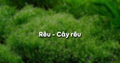 Bài 38: Rêu - Cây rêu