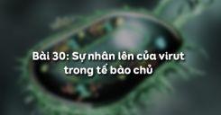 Bài 30: Sự nhân lên của virut trong tế bào chủ