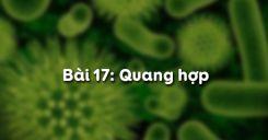 Bài 17: Quang hợp