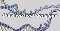 Bài 3: Điều hòa hoạt động gen