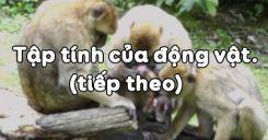 Bài 32: Tập tính của động vật (tiếp theo)