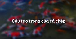 Bài 33: Cấu tạo trong của cá chép