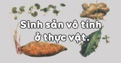 Bài 41: Sinh sản vô tính ở thực vật