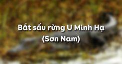 Bắt sấu rừng U Minh Hạ - Sơn Nam