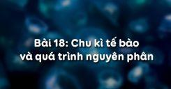 Bài 18: Chu kì tế bào và quá trình nguyên phân