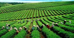 Bài 46: Thực hành Quản lí và sử dụng bền vững tài nguyên thiên nhiên