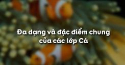 Bài 34: Đa dạng và đặc điểm chung của các lớp Cá