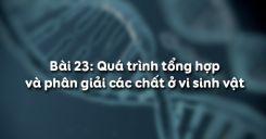 Bài 23: Quá trình tổng hợp và phân giải các chất ở vi sinh vật